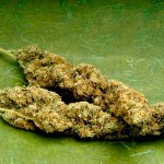 Herbal Bud – It's Not Just Marijuana Folks!